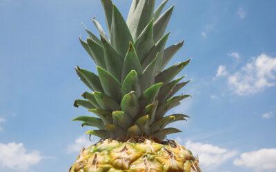 Nachhaltigkeit geschnittener Früchte «by Air»